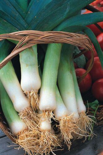 Légumes Musselburgh 800 graines poireaux