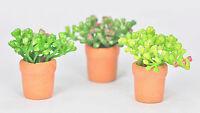 2 Miniature Plant In Pot For Dollhouse / Terrarium Garden Ornaments
