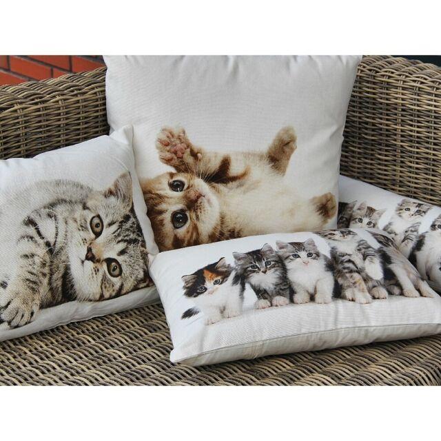 Kissen Kissenbezug Katze 35x50cm mit Füllung Katzenbaby Dekokissen Kuschelkissen