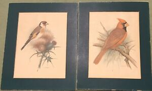 Vintage-Bird-Prints-2-8-X-10-Matted-Nice-Color-Paper-Thin-Estate-Find