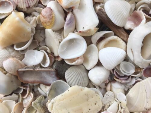 Crushed Broken Sea Shells Florida 22 LB Washed With Tap Water No Bleach!!!