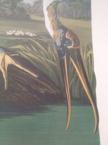 Wood Stork Ibis Audubon Plate Print Picture Arts Poster