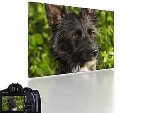 ihr eigenes foto als leinwand auf keilrahmen fotoleinwand bild leinwanddruck ebay. Black Bedroom Furniture Sets. Home Design Ideas