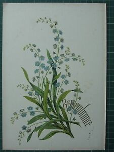 1848 PRINT ~ FORGET ME NOT - REMEMBRANCE - FLOWERS AND THEIR KINDRED THOUGHTS
