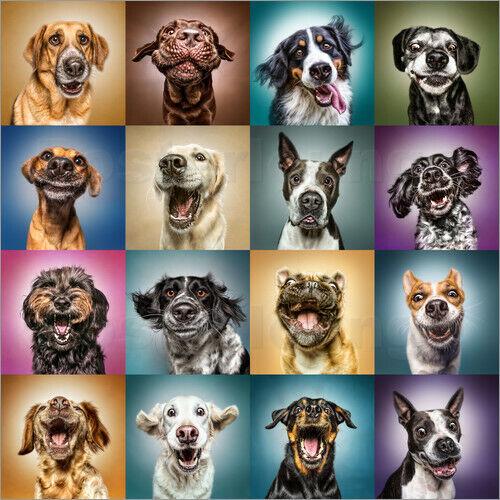Poster Drôles de chiens Manuela Kulpa