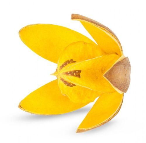 6cmSoymida febrifugaTrockenblumenNaturdeko NaDeco® Wildlilie gelb ca