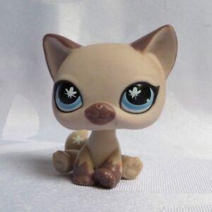 Littlest petshop lps 664 hasbro cat chat siamois beige prune yeux bleu papillon ebay - Petshop papillon ...