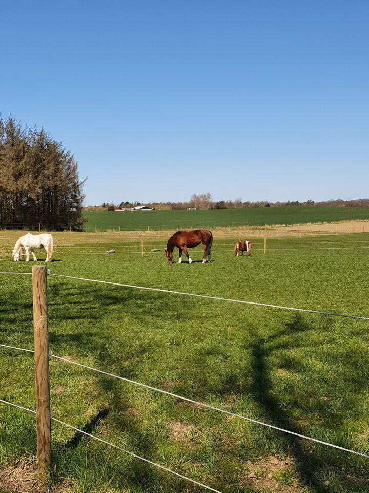Islænder/stor pony/lille hest søges.  Da min da...