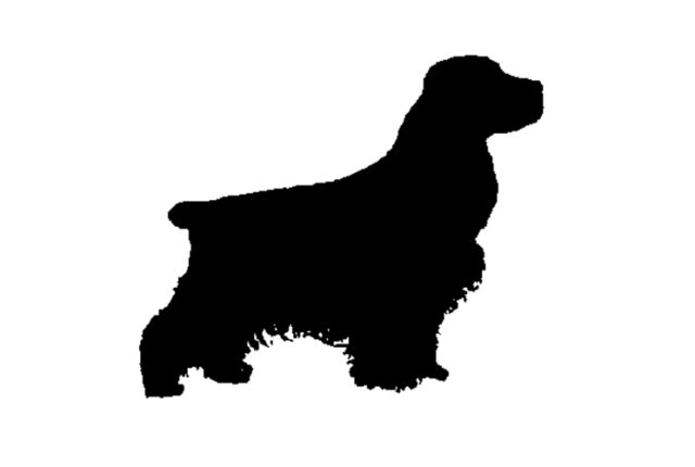 2 Cocker Spaniel - Dog/Animal - Wall/Laptop/Car - Vinyl Decal/Sticker -Free Post