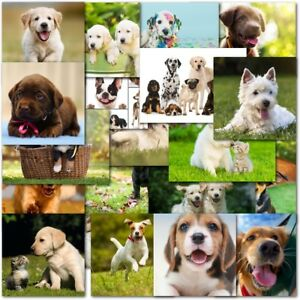 Image Is Loading Pack Of 20 Mixed Dog Lovers Birthday Amp