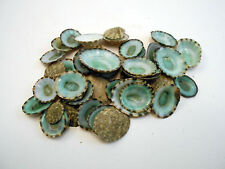 100 Green Limpet Shells Seashells Shellcraft Beautiful Beach Nautical BULK