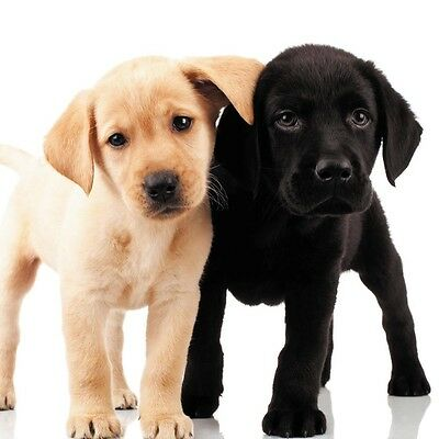Labradors Black Yellow Chocolate Greeting Cards Collection On Ebay