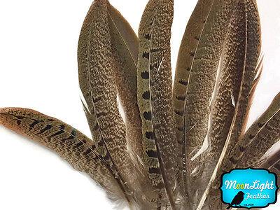 ENGLISH RINGNECK Natural Pheasant Feathers 6-8