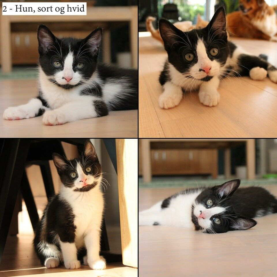 2 kattekillinger søger stadig blivende hjem