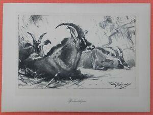 Glorieux Chevaux Antilope Hippotragus Equinus Wilhelm Kuhnert Afrique Lithographie 1920-afficher Le Titre D'origine De Haute Qualité Et Peu CoûTeux