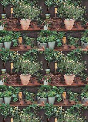 Potted Plants Wallpaper Floral Botanical Kitchen Paste The Wall Vinyl Erismann 4002790196488 Ebay