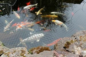 Heron deterrent heron guard pond guard pond covers pond for Garden pond guards