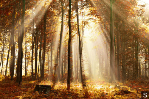 Tapete Tapeten Fototapeten Fürs Wohnzimmer FDB389 Fototapete Vlies Wald