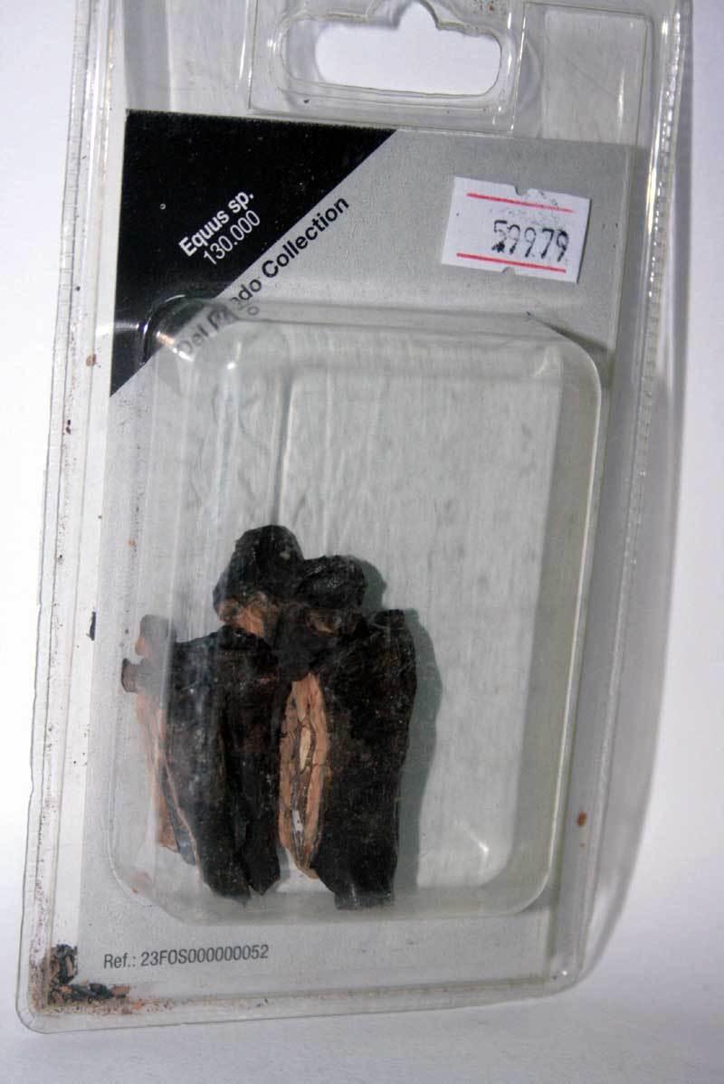 Equus, sp. 130.000 del prado sammlung fossiler in blister sigillato mg1 59979