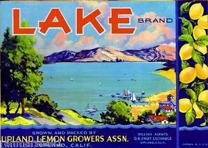 Upland Zinnia Lemon Citrus Crate Box Label Art Print