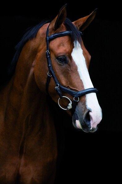 HORSEWARE Rambo Micklem Deluxe Competition schwarz Pony-X-Full Ledertrense TOP TOP TOP 13e211