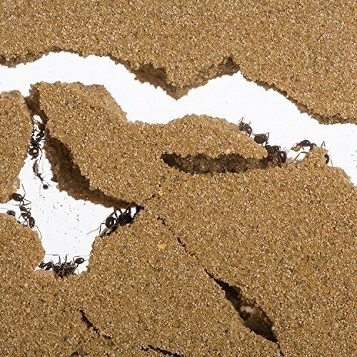 Anthill, Formicarium, Educational, Ants Sand Ant Farm