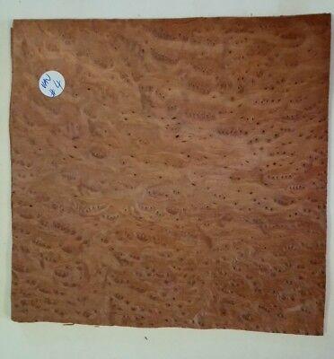 CONSECUTIVE SHEETS OF POPLAR BURR VENEER 23 X 31 cm POP#4 MARQUETRY
