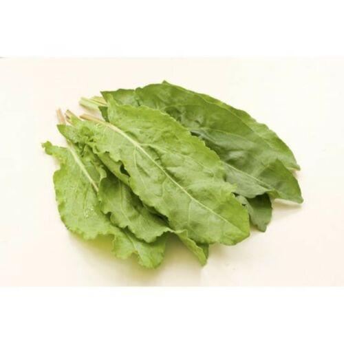 French Acetosa canaigre UK Sourced BIOLOGICO SEMI NATURALE 0.5 grammo seminare BY11//2022 Co-o