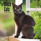 Black Cats 2017 Wall Calendar 9781465055156