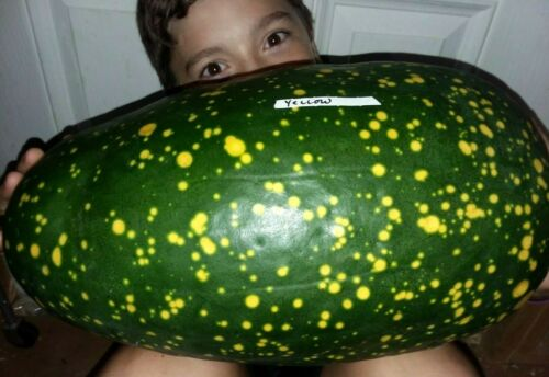 Yellow Flesh Moon AND Stars Watermelon Seeds LEAVES /& FRUIT BOTH VARIEGATED