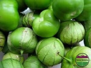 USA-HEIRLOOM-Organic-Green-Tomatillo-25-200-seeds-container