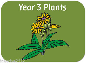 Ks2 y3 science topic plants teaching resources iwb display image is loading ks2 y3 science topic plants teaching resources iwb ccuart Image collections