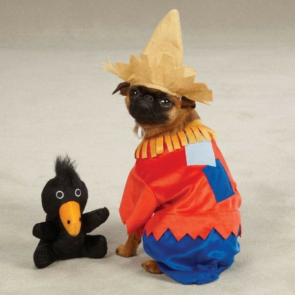 SCARECROW Pup Pet Dog Halloween Costume XS, S, M, L, XL