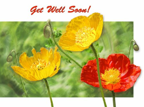 GREETING//NOTE CARDS BEAUTIFUL Yellow-Orange Flowers  4 Messages 12