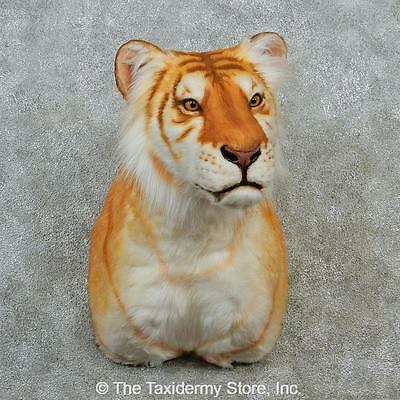 LARGE BENGAL TIGER HEAD MOUNT HEAD  TAXIDERMY