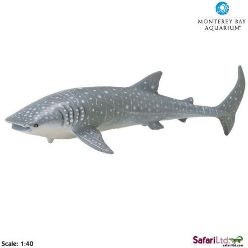 WHALE SHARK by Safari Ltd//toy//sharks//whales//Monterey Bay//210602