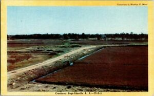 1940-039-S-CRANBERRY-BOGS-EDAVILLE-RAILROAD-MASS-POSTCARD-KK1