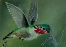 CALLIOPE HUMMINGBIRD Original ACEO Oil Hand Painted Bird Wildlife Signed by JV