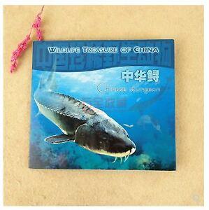 China 1999 Rare Wildlife (Chinese Sturgeon) 5 Yuan Coin  中国珍稀野生动物纪念币 中华鲟 康银阁收藏册