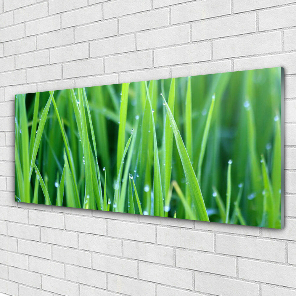 Impression sur verre Wall Art 125x50 Photo Image Herbe Nature