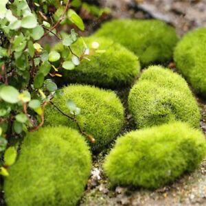 Seeds Moss Bonsai Ball Sagina Subulata Outdoor Grass Garden