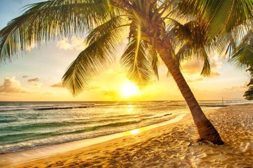 non tissé-Dune-Coucher de soleil sable papier peint Panorama 605 V Photo murale-Palm Beach