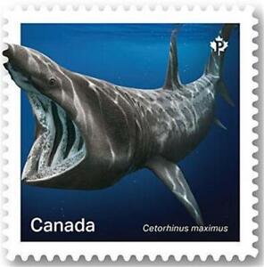 "2018 Canada 📭🦈 BASKING SHARK Stamp 🦈 ""P"" Single MNH 🦈📬"