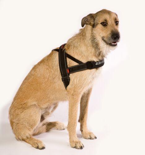 Ezy-dog ajuste rápido arnés de alta calidad y comodidad para Perro /& propietario