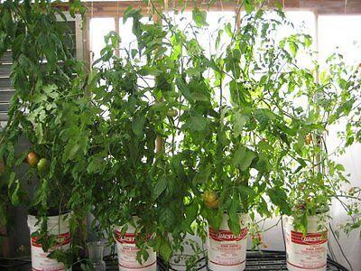 Bucket Drip Hydroponic System 12 Site - recirculating garden grow system pump
