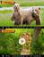 Indexbild 7 - TOGUARD WLAN Wildkamera 20MP 1296P Video Jagdkamera Bewegungsmelder Nachtsicht