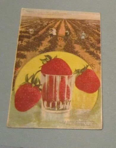 1910 Buckbee's Great Ruby Strawberry Rockford Seed Farms Advertising Postcard