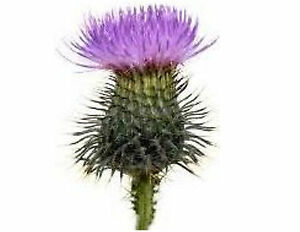 Scottish thistle flower 130 small or 48 large sticky white paper image is loading scottish thistle flower 130 small or 48 large mightylinksfo