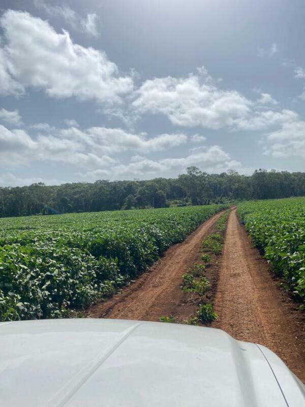 Terreno de Inversión Agrícola en Campeche