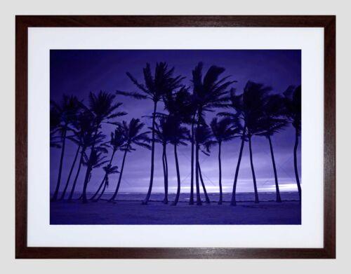 PURPLE SILHOUETTE TALL PALM TREE BLACK FRAME FRAMED ART PRINT PICTURE B12X8841